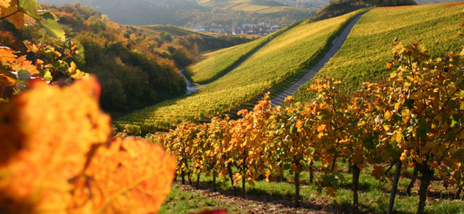 Paso Robles Wineries at California