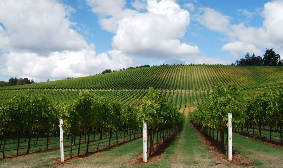 Harvest Wine Weekend at Paso Robles Wine Country