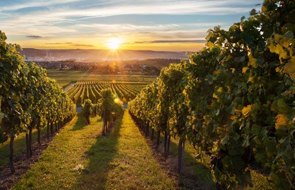 wineries-in-paso-robles-california