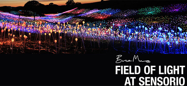 Field of Light at Sensorio Special Discount