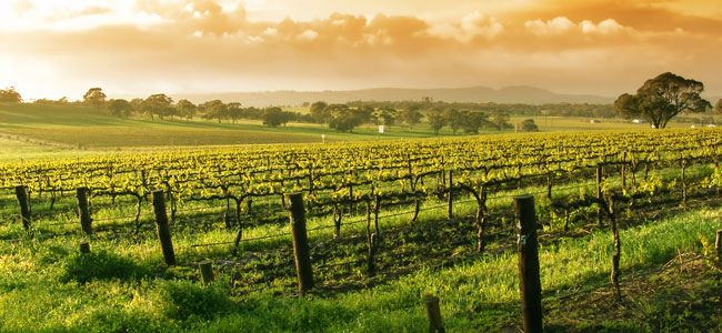 Wine Tour Package at Paso Robles Hotel