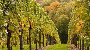 Wine Tour Package at California Hotel